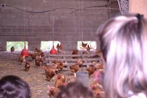 les poules de la ferme de malagra